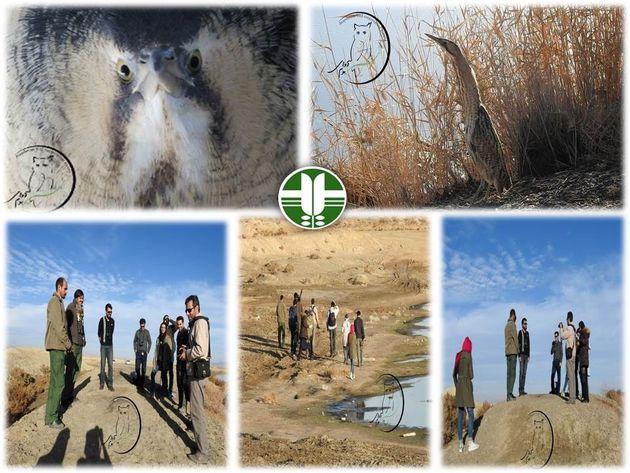 رهاسازی پرنده بوتیمار در حاشیه تالاب بین المللی گاوخونی