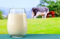 روزانه 30 تن شیر در واحدهای دامداری تنکابن تولید می شود