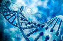 مرکز ژنتیک میبد سالانه بیش از چهار هزار مراجعه کننده دارد