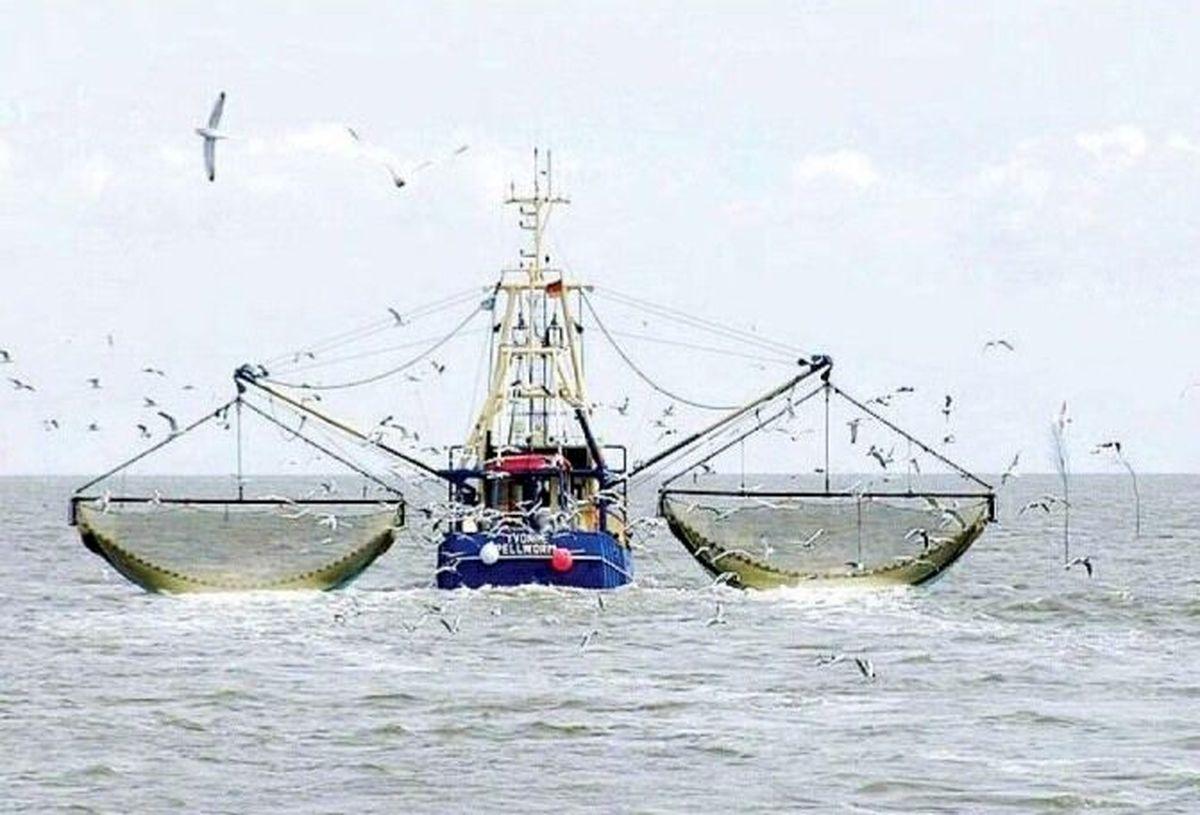 صید ترال همچنان ادامه دارد!