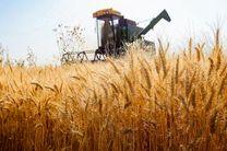 دلیل کاهش کشت گندم، تغییر الگوی کشت به محصول کم آبخواه است