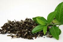 مصوبه دولت درباره شرایط برگزاری مزایده فروش چایهای سنواتی ابلاغ شد