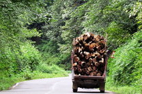 کشف چوب قاچاق در املش