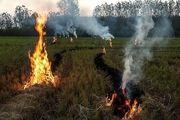 کشاورزان از سوزاندن کاه و کُلش درمزارع برنج اطراف شهر رشت خودداری کنند