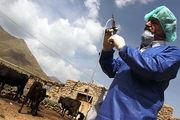 رزمایش پدافند غیرعامل بیماریهای انسان و دام در خرمآباد برگزار شد