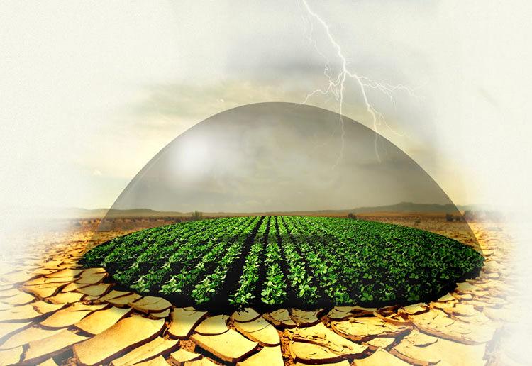 دولت تا میزان ۷۸ درصد حق بیمه محصولات کشاورزی را پرداخت میکند