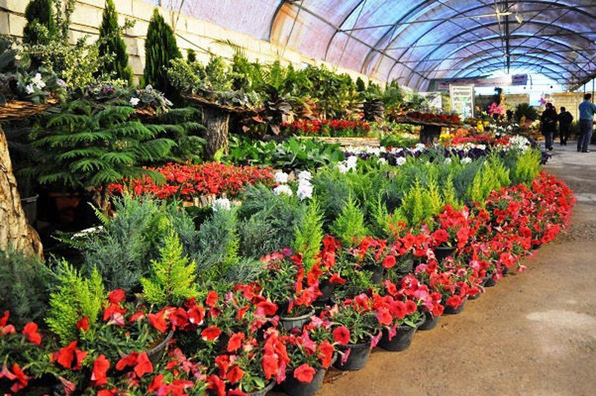 صادرات ۶۲ هزار گلدان گل از نوشهر به خارج کشور