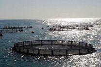 هرمزگان قطب پرورش ماهی در قفس