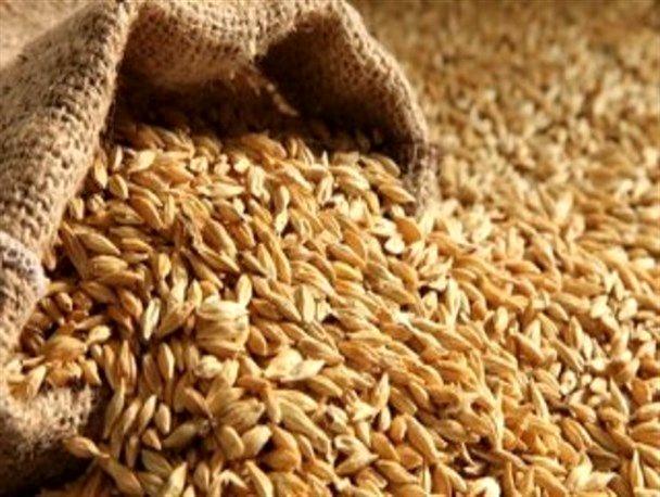 پیش بینی خرید تضمینی 180 تن گندم از کشاورزان استان اصفهان