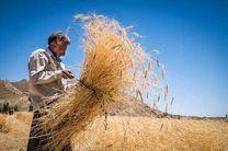 خرید بیش از 551 هزار تن گندم از گندم کاران کرمانشاه
