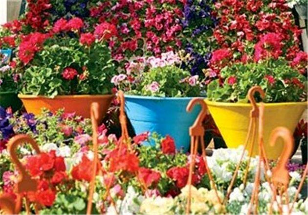 جشنواره بهاره گل و گیاه در اصفهان برگزار می شود