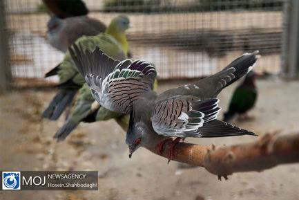 بهره برداری از باغ پرندگان قم
