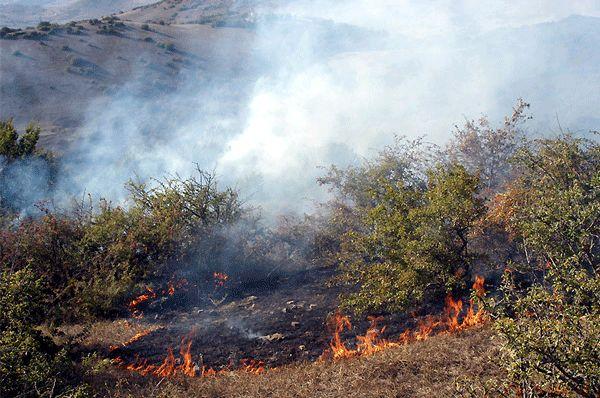 آتش سوزی اراضی جنگلی گیلان سطحی و در پوشش علفی بوده است