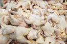 دلیل کم شدن تقاضا در بازار مرغ