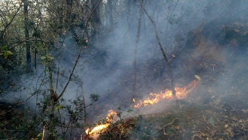 آتش سوزی جنگل های اسالم مهار شد