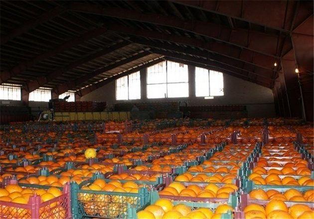 ۱۰۰تن میوه ایرانی به قطر رسید