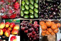صادرات میوه به شرط بسته بندی استاندارد
