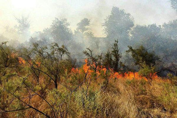 آتشسوزی 10 هکتار از مراتع جنگلی روستای «نِیتَل» بخش کجور