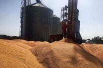 خرید ۶۰۰۰ تن گندم  در خراسان رضوی