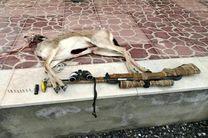 دستگیری متخلف شکار و صید آهو در پارک ملی قمیشلو