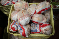 کشف احتکار 47 هزار قطعه مرغ در مازندران