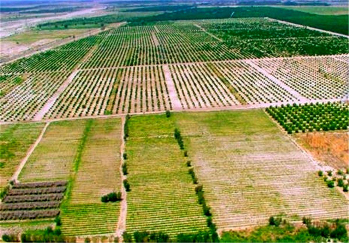 بازگشت هزار و 610 مترمربع زمین کشاورزی به چرخه تولید