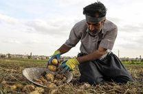 ممنوعیت صادرات پیاز و سیب زمینی  در هرمزگان