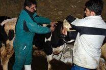 آغاز مرحله دوم مایه کوبی تب برفکی  در استان کردستان