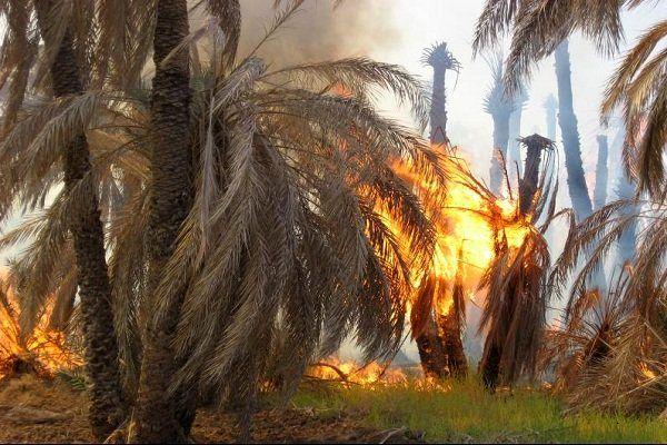 آتش نخلستانی در فین را خاکستر کرد