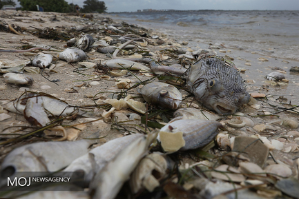 مرگ آبزیان در سواحل فلوریدای آمریکا