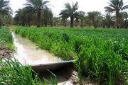 اجرا دستور العمل شیوه تعیین بهره وری آب در بخش کشاورزی خوزستان