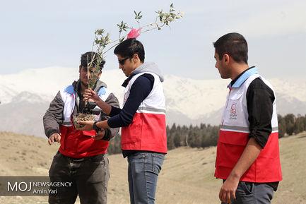 کاشت درخت صلح