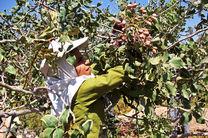میانگین مصرف سم در باغات ایران 50 درصد مصرف جهانی است