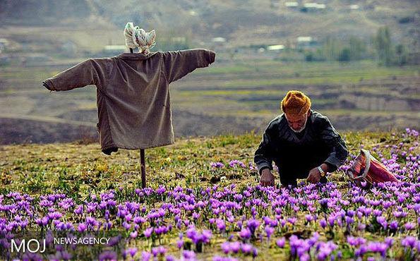 ایجاد ۱۷۳ هزار شغل در روستاهای کشور