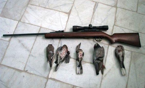 کشف و ضبط 4 قطعه کبوتر وحشی از شکارچی غیرمجاز در سرپل ذهاب