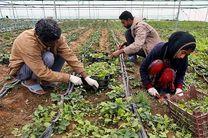 کسب رتبه دوم جذب تسهیلات اشتغال روستایی در مازندران
