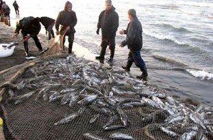 تولید 96 هزار تن انواع آبزیان دریایی و پرورشی در مازندران طی سال گذشته