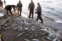 افزایش 34 درصد صید ماهیهای استخوانی در سبد جامعه صیادی مازندران