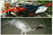 دستگیری 2 متخلف شکار در کاشان/ کشف لاشه یک آهو