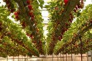 حمایت از ورود سرمایهگذاران و اشتغال در حوزه کشاورزی