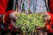 جشنواره جوکول در پیاده راه فرهنگی رشت برگزار شد