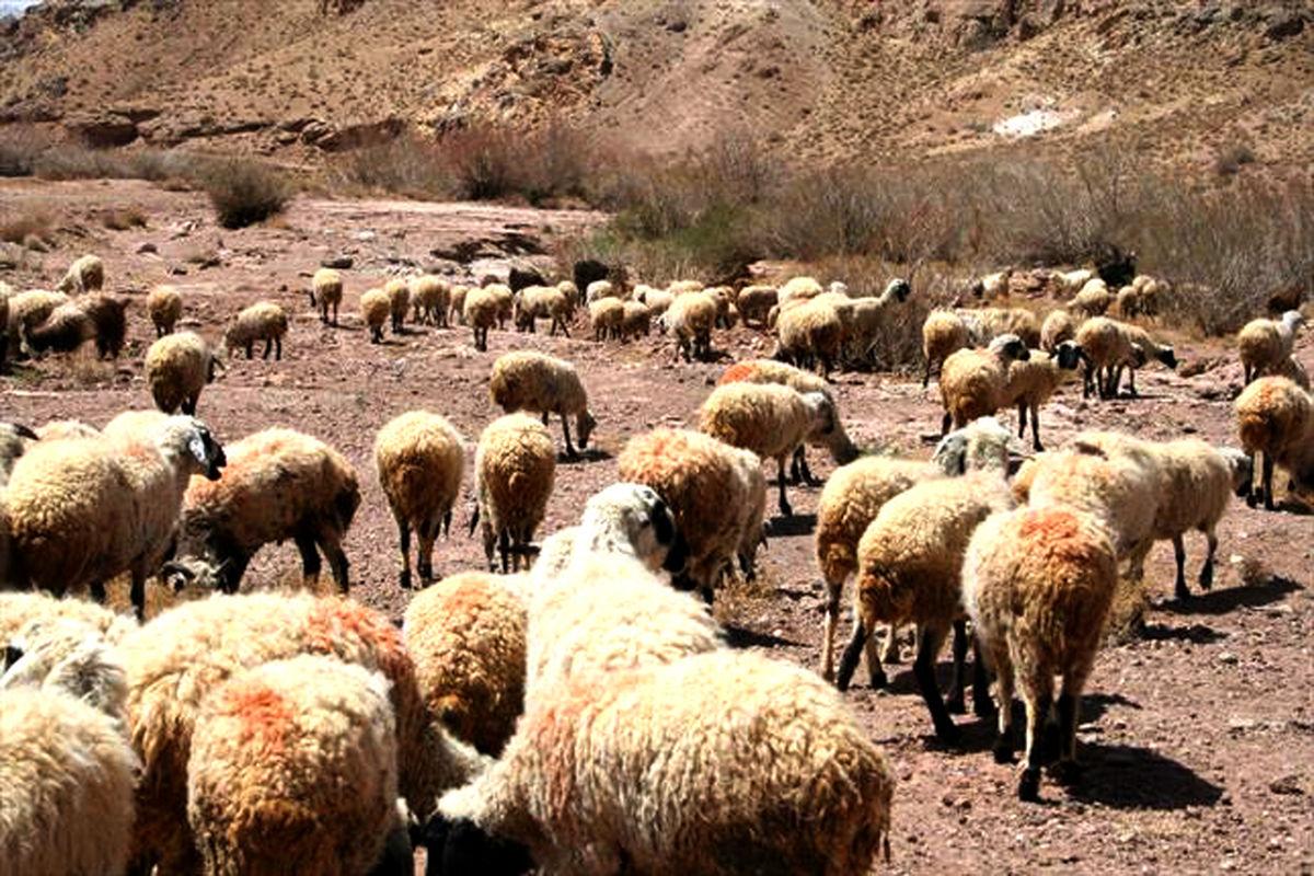 خشکسالی آسیب جدی برای عشایر خراسان رضوی است