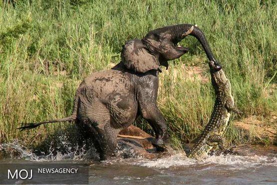 آیا نمایش برنامه های حیات وحش بر کاهش خشونت تاثیر دارد