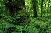بازدید بازرسان یونسکو از جنگلهای هیرکانی گیلان