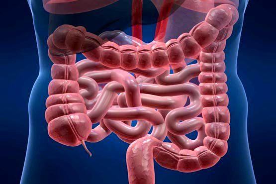 تاثیر باکتری روده در خطر ابتلا به چاقی