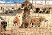 سایت نگهداری سگهای ولگرد بندرعباس به انجمن پناه واگذار شد