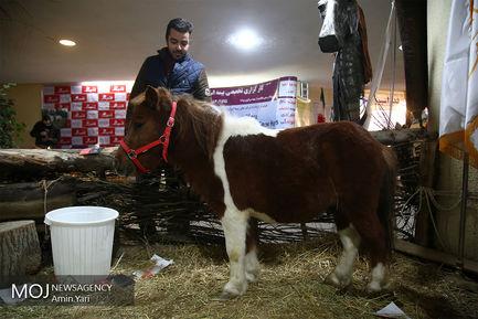 جشنواره ملی اسب تهران