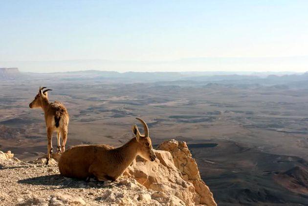 درهای مناطق حفاظت شده به روی گردشگران باز است