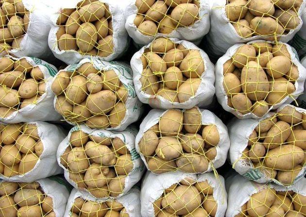 ایران در تولید سیب زمینی خودکفا شد