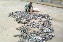 قتل عام 368 قطعه پرنده یا کریم در شادگان و دستگیری شکارچیان غیر مجاز